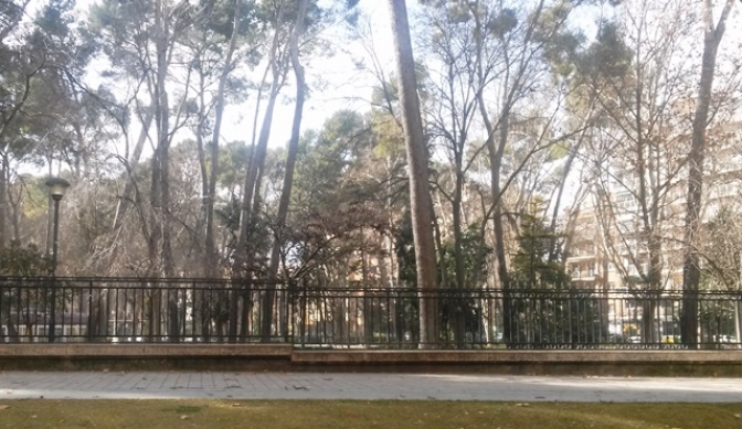 El viento mantiene cerrados los parques de Albacete y otras localidades de la provincia