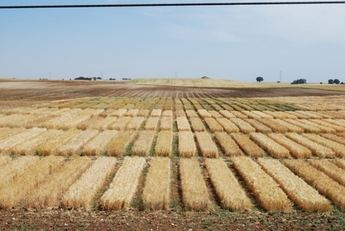 Agricultura ha concedido 364 autorizaciones para descaste de conejos