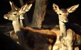 'La Dehesa' de Riópar reabre sus puertas con rutas guiadas para conocer la fauna ibérica el próximo sábado