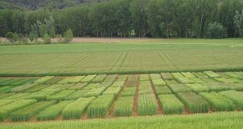 Casi 26.000 agricultores y ganaderos de Albacete han solicitado las ayudas del pago único