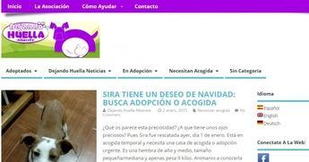 La Asociación en defensa de los animales 'Dejando huella' de Albacete hace balance de sus primeros meses de vida