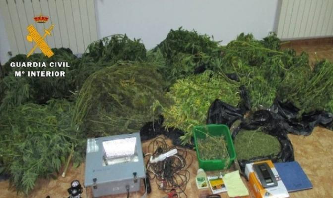 Dos vecinos de Ossa de Montiel detenidos por la Guardia Civil por cultivar cannabis