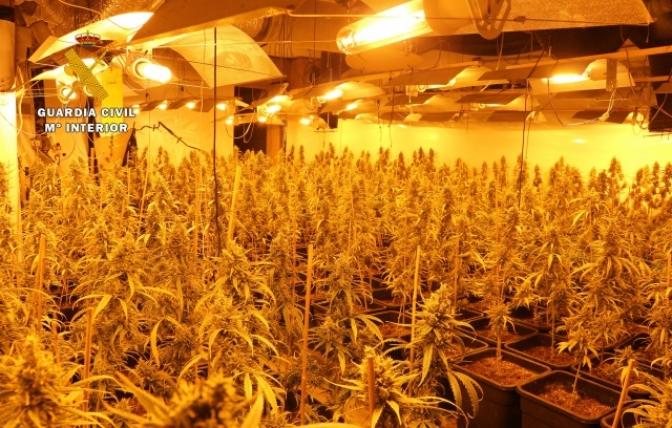 La Guardia Civil desmantela un centro de producción y germinación de cannabis y detiene a dos jóvenes en Balazote