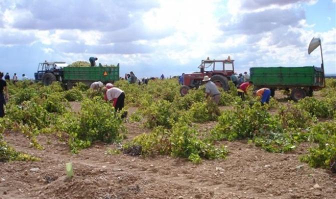 Hacienda reduce los módulos para explotaciones agrícolas y ganaderas con circunstancias especiales