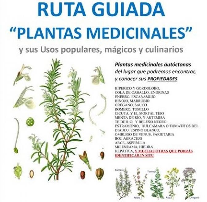 Ruta Guiada De Plantas Medicinales De Albacete Para Este Fin De
