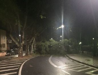El viento derriba un árbol del parque Abelardo Sánchez y corta el Paseo Simón Abril, en Albacete