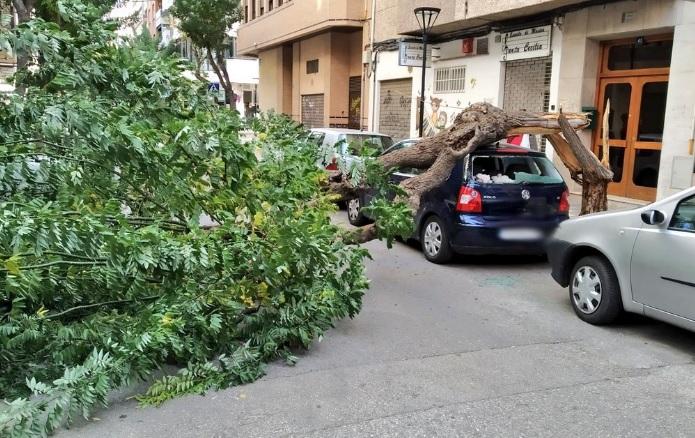Policía Local y bomberos de Albacete tuvieron que intervenir en 44 ocasiones por los vientos de los últimos días