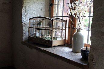 ¿Qué aves puedo tener en casa?