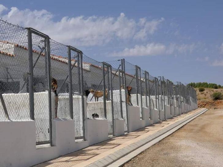 El centro provincial de Albacete recoge una decena de perros durante el Estado de Alarma