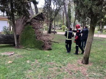 El Ayuntamiento de Albacete trabaja para restablecer la normalidad en la ciudad tras la caída de una quincena de árboles