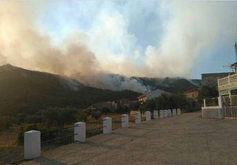 Aplicar medidas de restauración inmediatas tras un incendio forestal disminuye su impacto ecológico