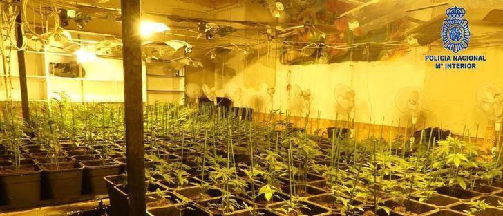 """La Policía Nacional de Hellín detiene a los siete integrantes de una organización criminal dedicada al tráfico de """"Cannabis"""""""