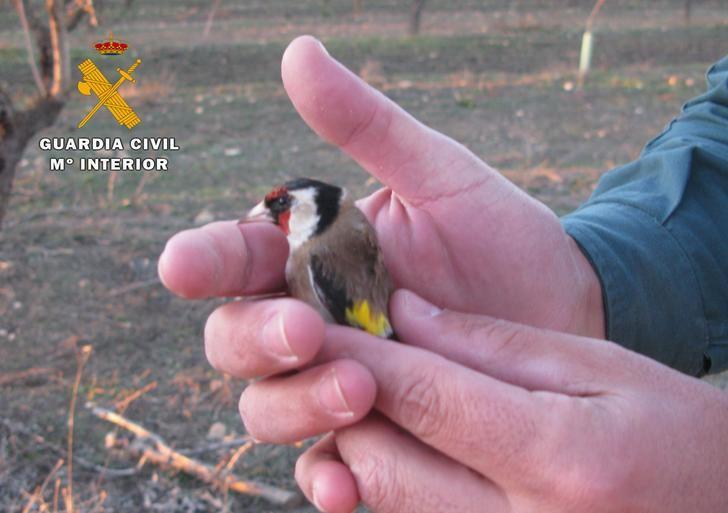La Guardia Civil de Hellín investiga a dos personas por capturar pájaros silvestres con medios prohibidos