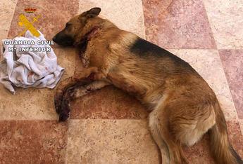 Detenidas tres personas en Caudete por extorsionar a un joven y causar daños a su perro