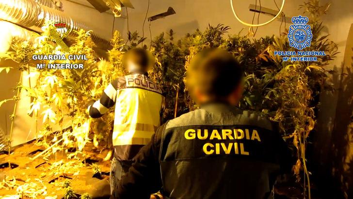 La Guardia Civil y la Policía Nacional de Albacete desmantelan un centro intensivo de producción de cannabis