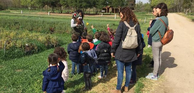 Ayudas de la Junta al transporte escolar colectivo para programas de educación ambiental en Castilla-La Mancha