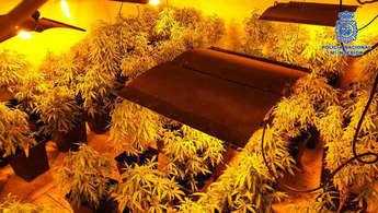 Tres detenidos y desmantelados dos laboratorios de marihuana en Pepino (Toledo)