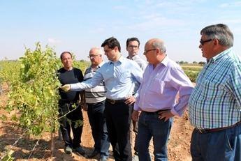1.500 hectáreas de cultivo afectadas por las últimas tormentas en  Abengibre, Fuentealbilla, La Recueja y Marimínguez (Alcalá del Júcar)