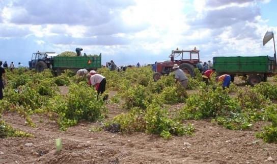 Castilla-La Mancha paga este lunes los 334 millones de euros del anticipo de la PAC, para 90.000 agricultores y ganaderos