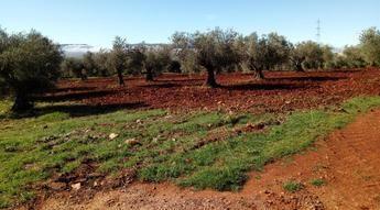 Castilla-La Mancha convoca los premios para galardonar a la mejor industria de Producción Ecológica