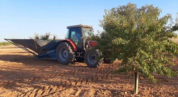 El 80% de las consultas sobre cultivos leñosos al ITAP están relacionados con el pistachero y el almendro