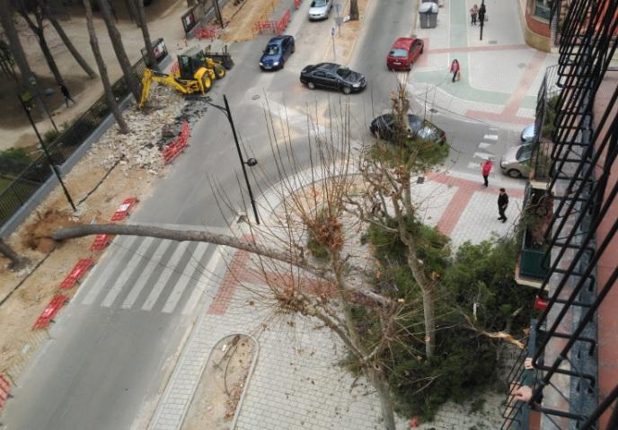 La caída de un árbol en el Paseo Simón Abril de Albacete pudo causar daños importantes