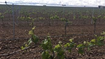 Asaja C-LM advierte del 'hundimiento' del sector del vino si no se activan medidas antes del mes de marzo