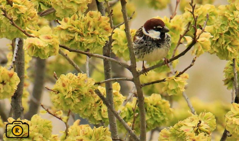 El Aula de la Naturaleza de Albacete invita a los ciudadanos a participar en el proyecto 'Aves desde mi ventana'