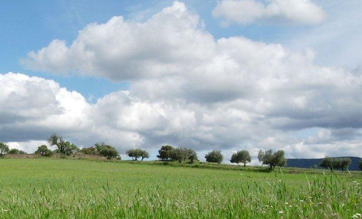 Castilla-La Mancha ha abonado ya 555 millones de euros de ayudas de la PAC