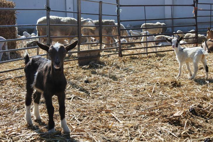 Agricultores y ganaderos de Castilla-La Mancha reciben 11,5 millones de euros de ayudas