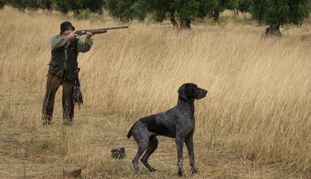 La federación caza de Castilla-La Mancha ejercerá la acusación en un caso de furtivismo en La Gineta (Albacete)