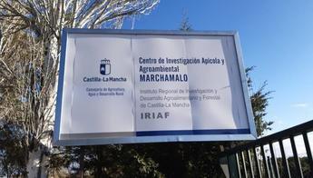 Castilla-La Mancha impulsa la reintroducción de la gallina negra castellana en el medio rural