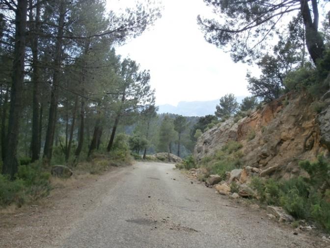 Yeste se Mueve denuncia el estado en el que se encuentran las pistas forestales del municipio