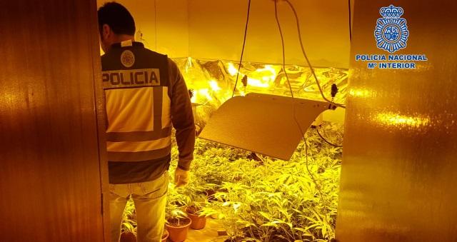 Desmantelan una plantación de marihuana en el centro de Talavera de la Reina