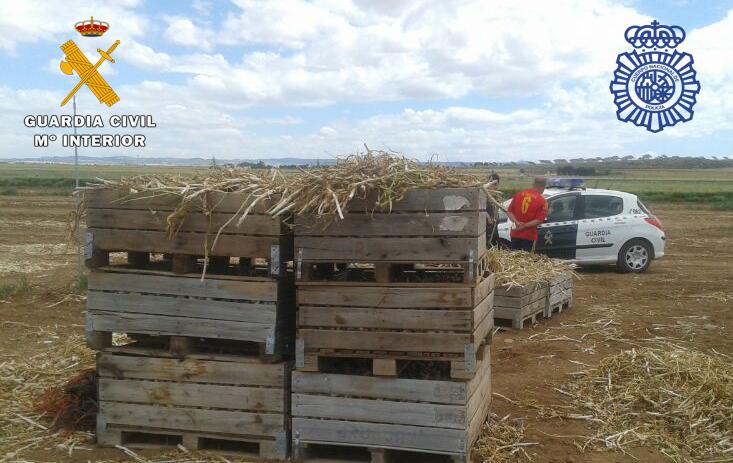 36 detenidos y dos investigados en inspecciones de la campaña del ajo de Albacete