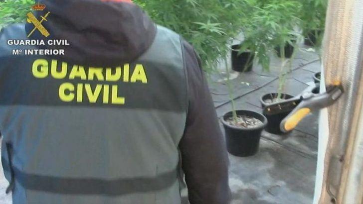 10 detenidos y 9.000 plantas de marihuana han sido incautadas en varios pueblos de Toledo