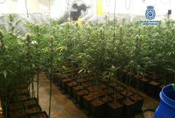 Desmantelado un laboratorio de marihuana en Bargas (Toledo) y detenidas a 4 personas