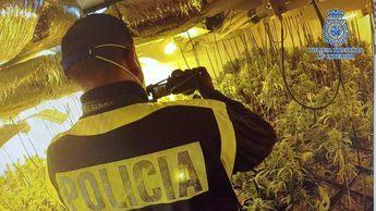 Desmantelado un clan familiar toledano dedicado al tráfico de marihuana y se requisan 3.600 plantas