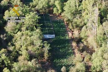 Cuatro detenidos por cultivar marihuana en la Sierra de Norte de Guadalajara
