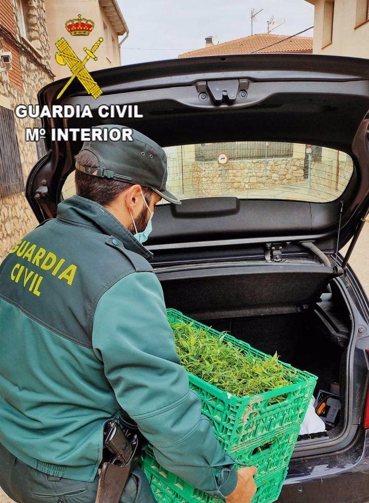 Detenida una mujer que transportaba cinco kilos de marihuana en cogollos listos para su distribución, en Uceda (Guadalajara)