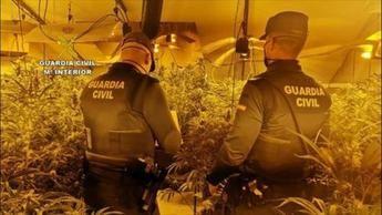 Dos detenidos y desmantelada una plantación 'indoor' de 512 plantas de marihuana en Horcajo de Santiago (Cuenca)