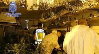Dos detenidos por el cultivo de 804 plantas de marihuana en Nambroca (Toledo)