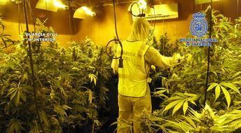 Detenidos por cultivar en una nave de Seseña (Toledo) más de mil plantas de marihuana