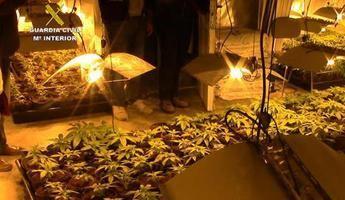 Desmantelan dos plantaciones de marihuana con 3.589 plantas en Ugena y Olías (Toledo)