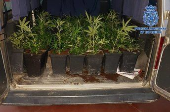 6 personas detenidas en Toledo y Talavera tras ser sorprendidas transportando marihuana y cocaína