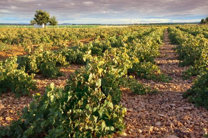 El pago definitivo de la PAC llega a 40 millones de euros para los agricultores de la provincia de Albacete