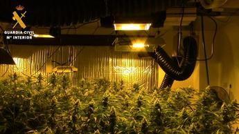 Detenidas 7 personas e incautadas 1.131 plantas de marihuana en Noez y Layos (Toledo)