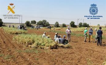 Las inspecciones en campaña del ajo en Albacete se saldan con cuatro empresarios detenidos por delitos contra empleados