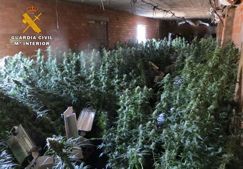 Detenidas 3 personas y desmantelado un centro de producción de cannabis en Minateda (Hellín)