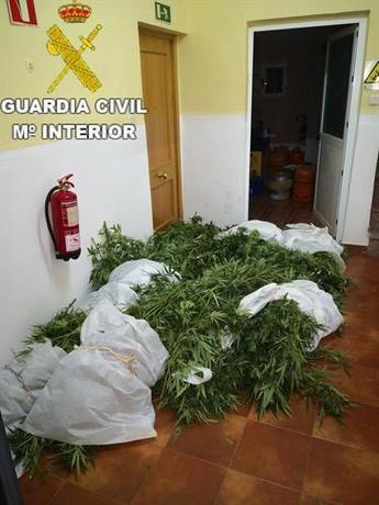 Detenido un joven por cultivar 15 kilogramos de marihuana en la serranía baja de Cuenca